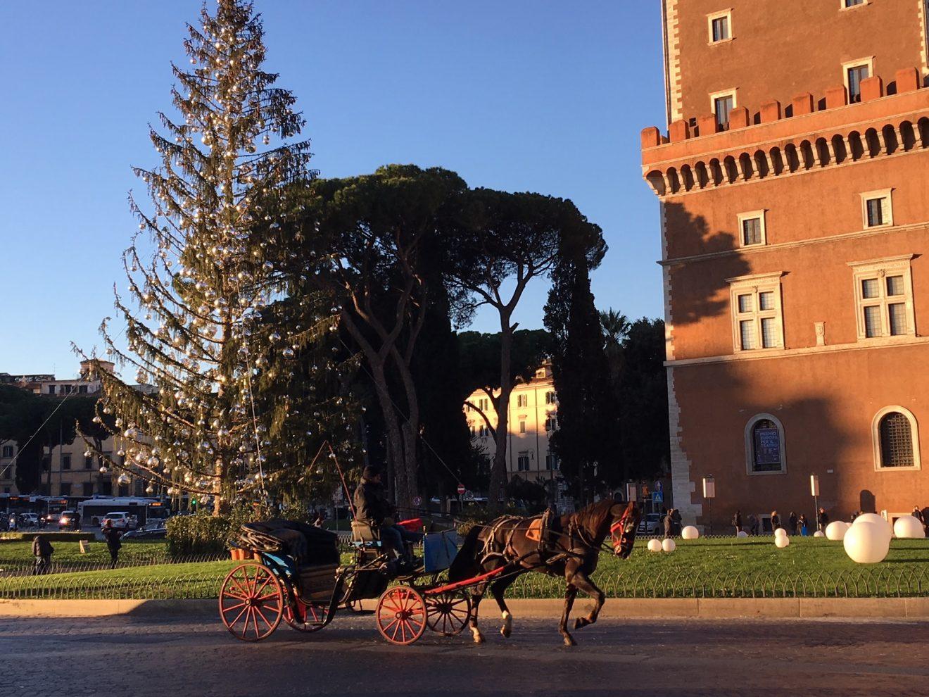 L'ultimo viaggio di Spelacchio: il Comune di Roma annuncia la 'nuova vita' del celebre albero di Natale