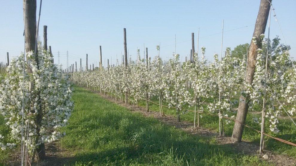 A Milano apre Frutta in Campo, un vero frutteto da cui raccogliere la frutta