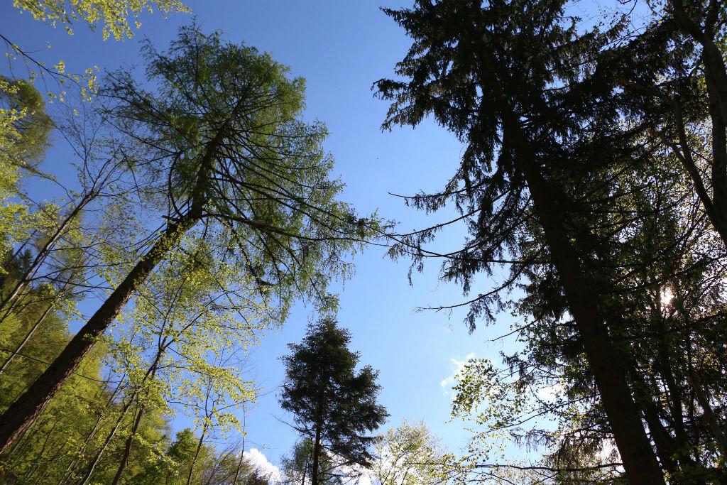 FSC® Italia: l'Earth Day è l'occasione per dare nuova linfa alle foreste