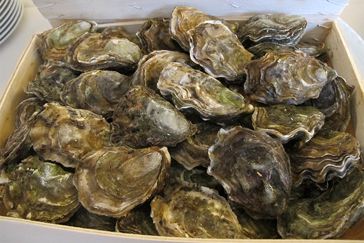 Un miliardo di ostriche per pulire il porto di New York