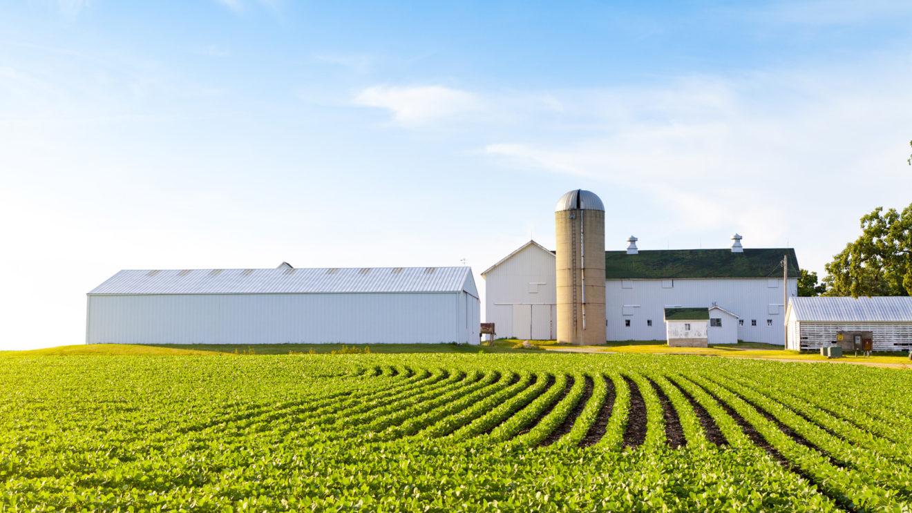 A Casalnoceto in provincia di Alessandria una vera  Bugsfarm integrata in un'azienda agricola