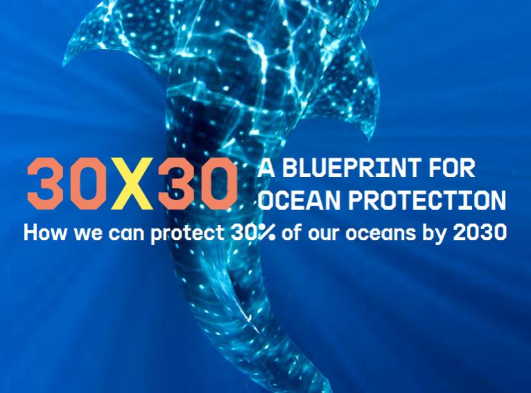 Greenpeace: ecco come proteggere un terzo degli oceani del pianeta entro il 2030