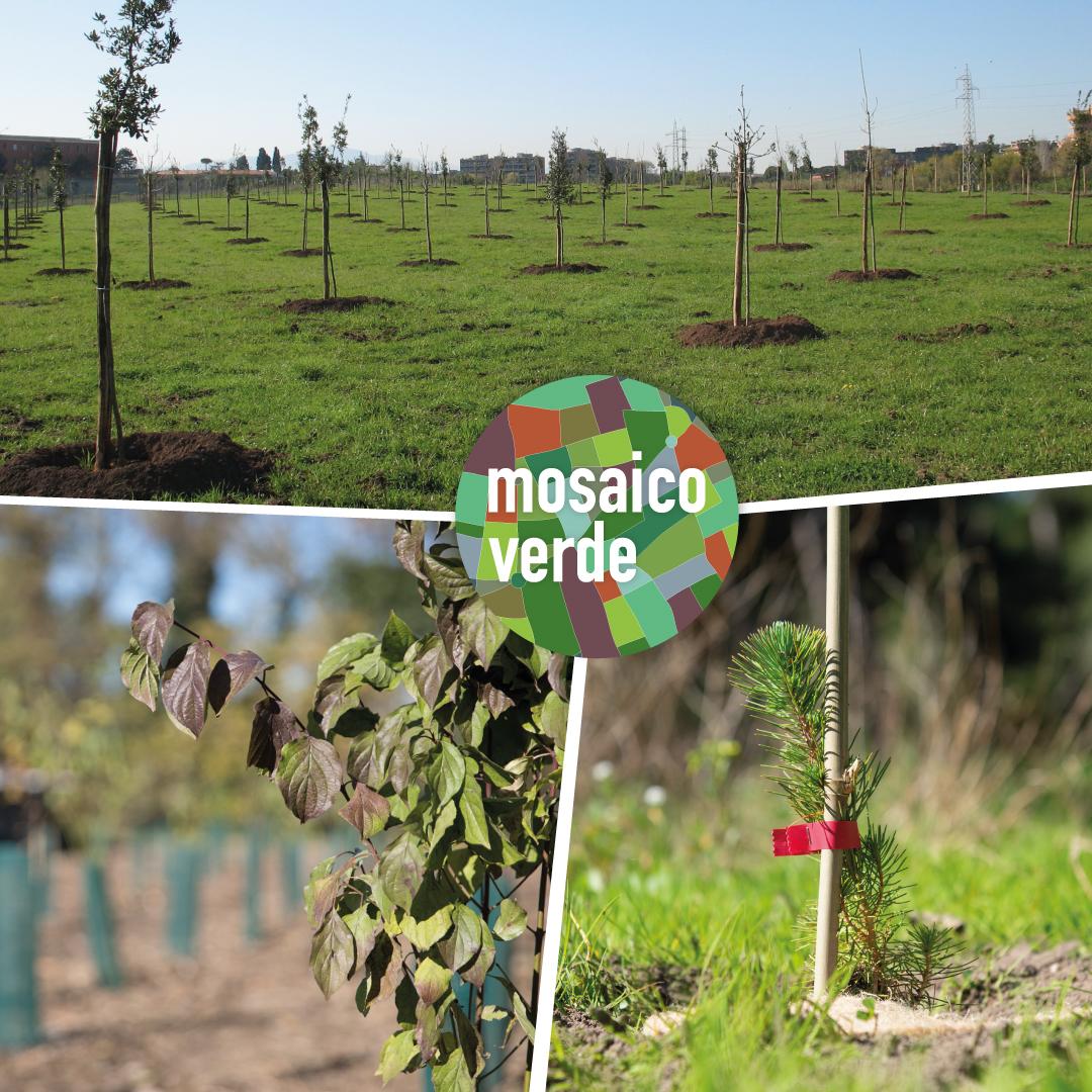 Mosaico Verde: saranno piantati oltre 233.000 alberi grazie alla collaborazione tra enti locali e aziende private